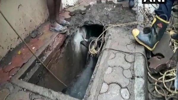 Mumbai: Buffalo falls in drain, rescued later