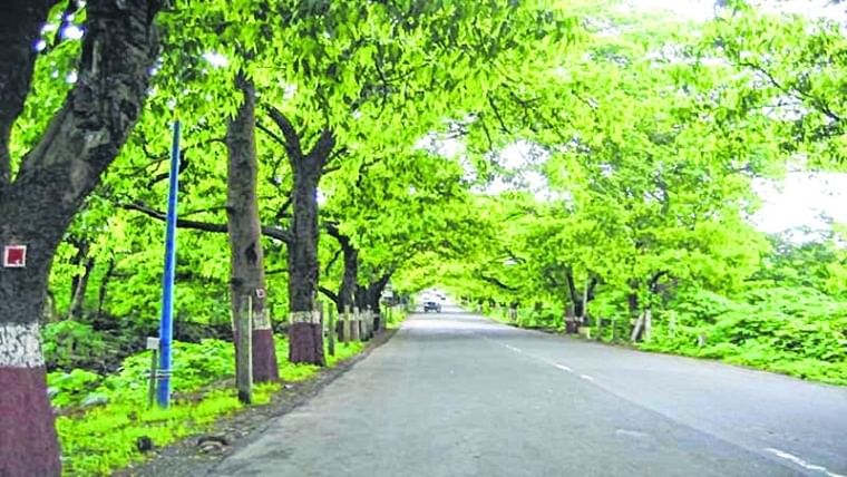 Bhopal: Now Selfie at plantation drive to encourage green cover