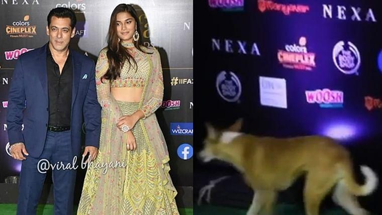 Watch Video: Stray dog at IIFA 2019 steals Salman Khan's thunder