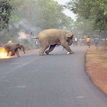 Netizens vent anger on social media images that show villagers setting elephants on fire