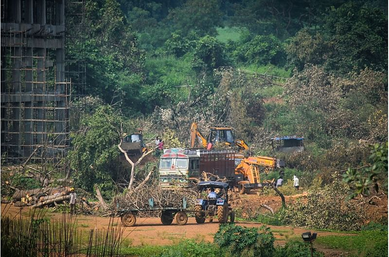 Aarey and its aftermath