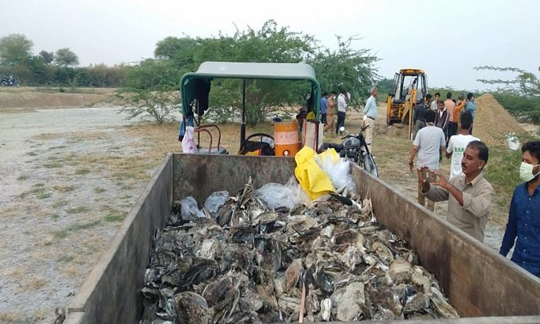 Sambhar lake, the death bed for thousands of birds