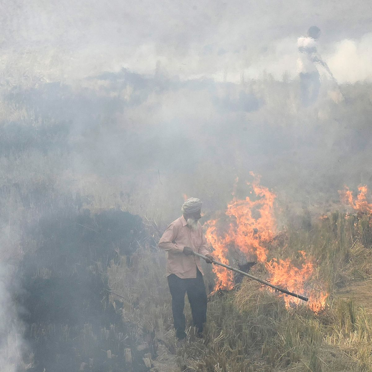29 farmers arrested for stubble burning in UP's Pilibhit, over 800 FIRs filed