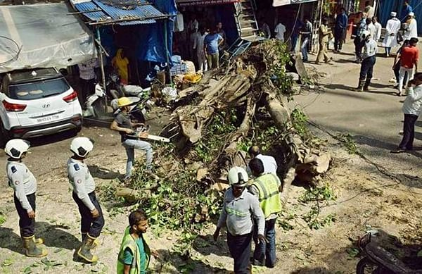 Mumbai: Three injured in tree collapse in Chembur