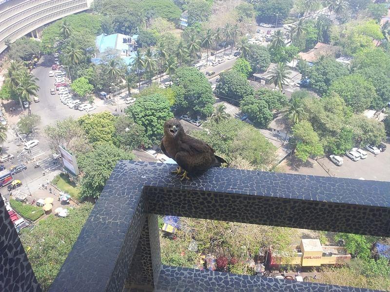 Yours Truly: Adman, birdman