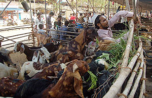 Plea in SC against sacrificing animals on Bakr-Eid