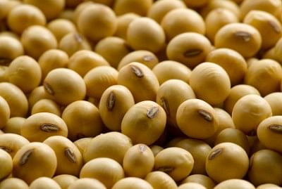 Salt tolerance gene in soybean identified