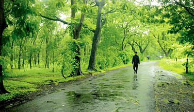 Aarey trees become heavily-leaned on poll plank