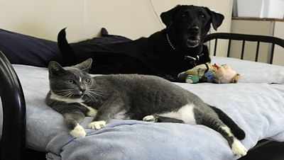 Cats drove extinction of many dog species
