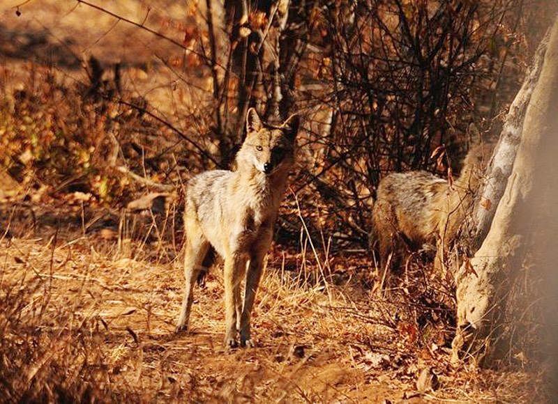 Sitamata Wildlife Sanctuary<br />Picture credits: www.sitamatawildlifesanctuary.com