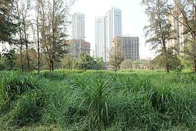Save Aarey forest: Supporters go on hunger fast