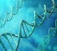 New genes responsible for stroke, dementia discovered