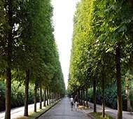 Why should people live near green spaces?