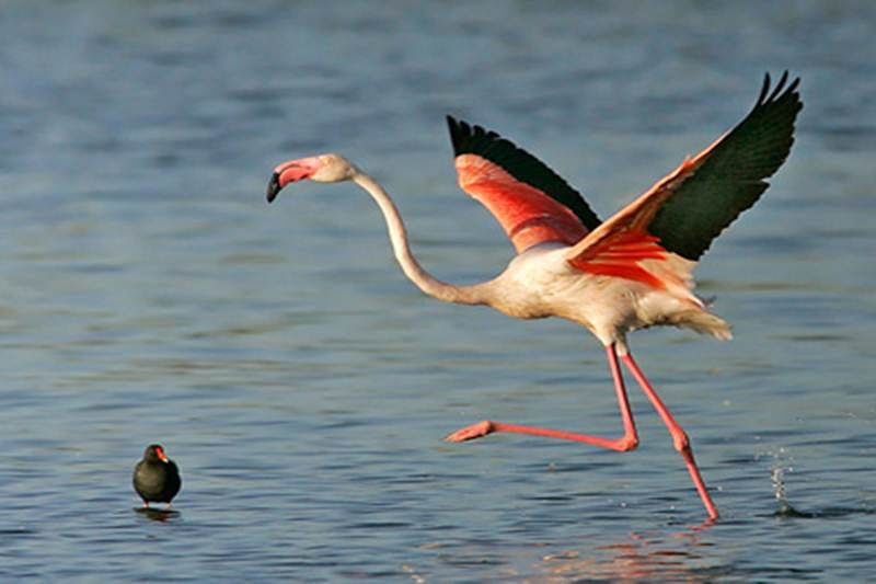 Information centre on flamingos to be set up in Airoli area