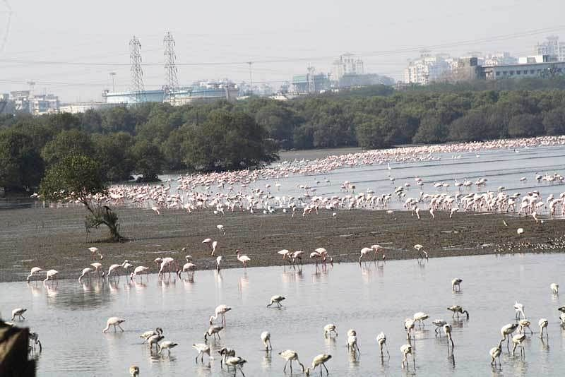 Mumbai: To speed up work at trans harbour link, state wants to work in night, during flamingo season