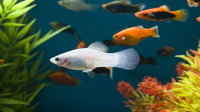 Indian scientists recycle fish bio-waste into green energy