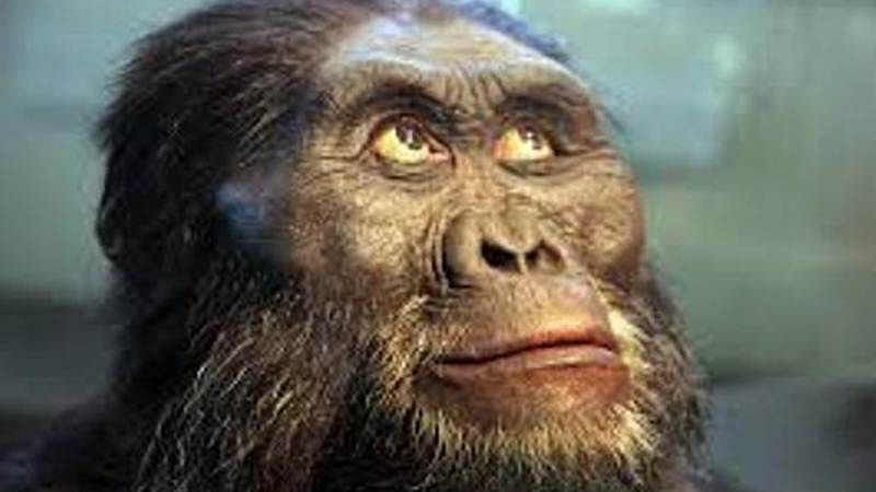 Human ancestor 'Lucy' could climb trees: study