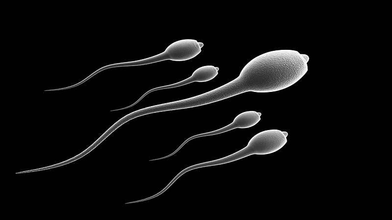 Transwomen may now produce sperm too!