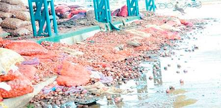 Bhopal: 75% of onion stock procured last year was destroyed: Government