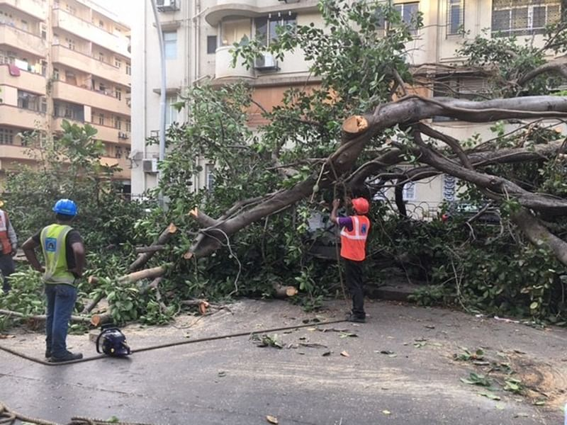 Mumbai: Soon, agencies could cut trees without BMC's permission