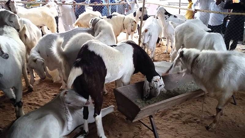 Eid al-Adha 2017: Buy online Bakra for this Eid, check out full details