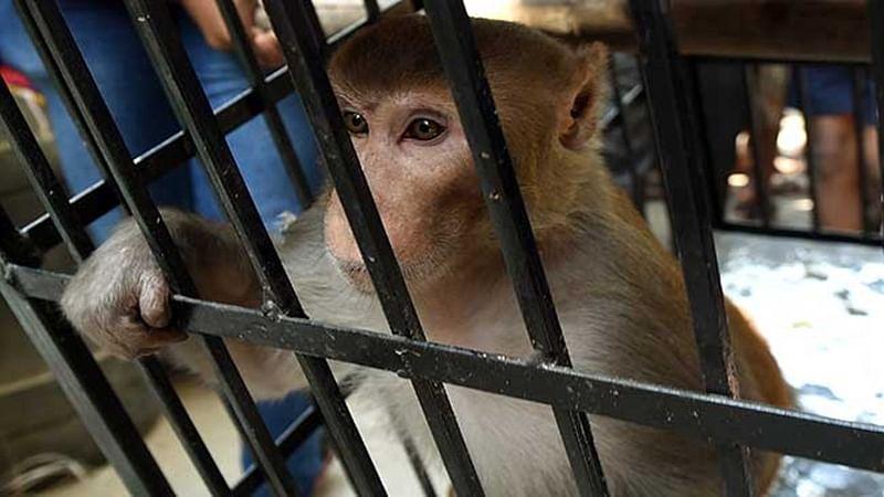China-backed hydropower project in Indonesia: Dam threatens rarest orangutan