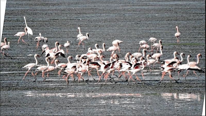 Nature lovers to enjoy boat ride in Thane creek from next month