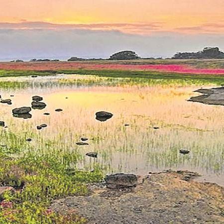 Global lakes now experience harmful algal blooms