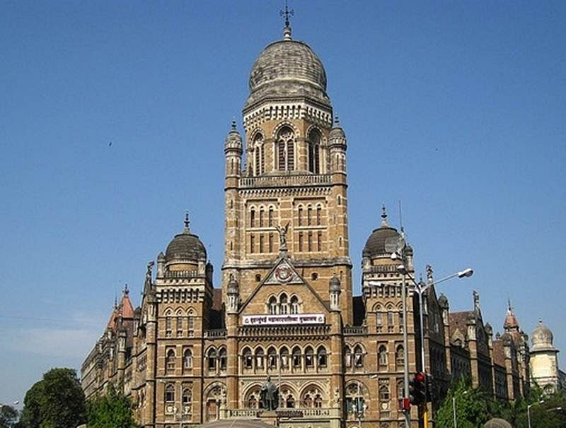 Poll derails BMC plan to sterlise hospital cats