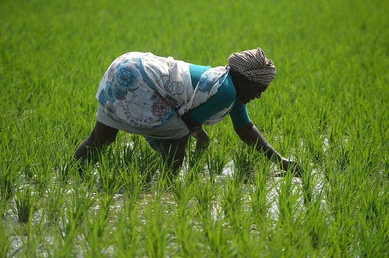 Budget 2019: New drivers in agriculture get impetus