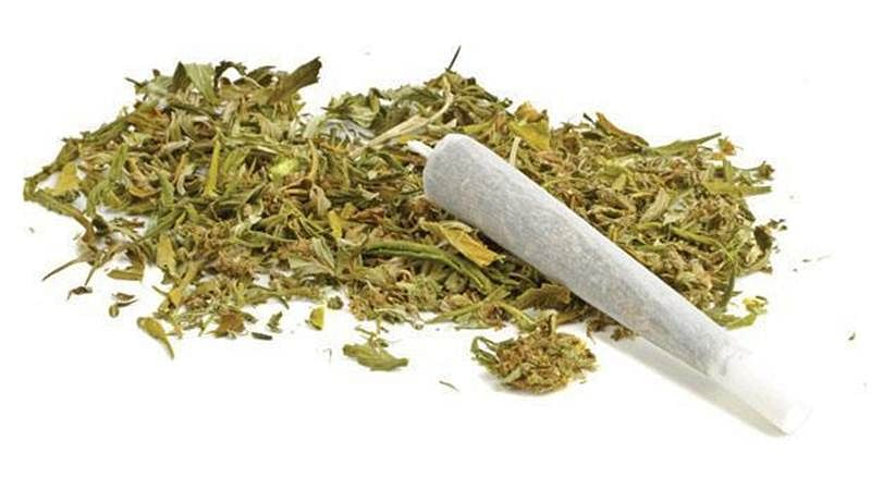 Mumbai: Anti-Narcotics Cell seizes 500 kg cannabis