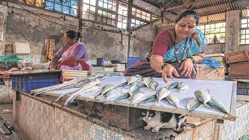 Mumbai Plastic ban: Koli community to plan protest as fish vendors' business dips by 80 percent