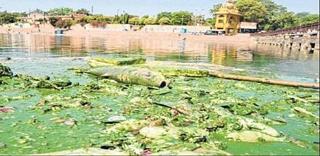 Ujjain: People react sharply on pathetic condition of river Kshipra