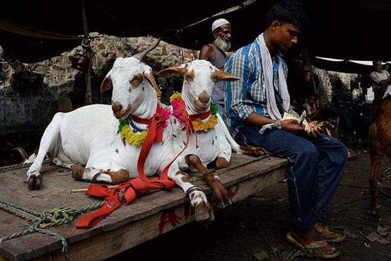 MBMC plans to vaccinate around 10,000 goats before Bakri Eid