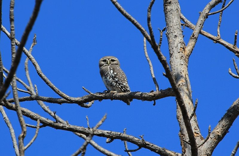 Forest Flash! In search of an elusive owl