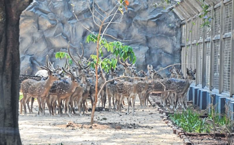 Mumbai: Byculla zoo to see tiger cages soon…